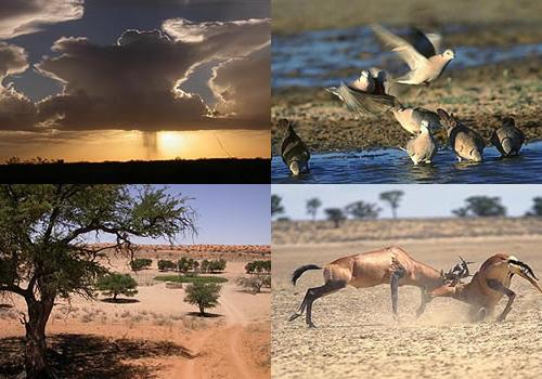 Private Kalahari Tours   Northern Cape   Upington