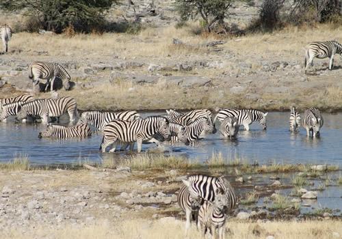 Richter Safaris6Cs1