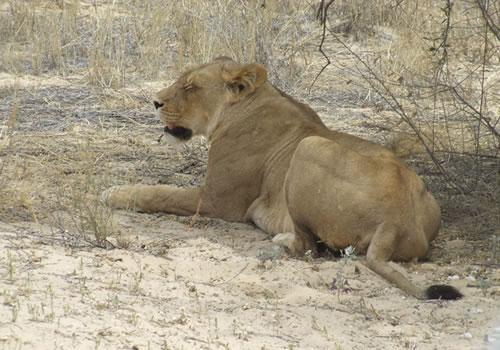 Richter Safaris_26s